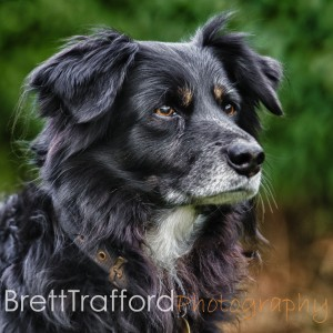 Brett Trafford Photography--121