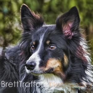 Brett Trafford Photography--122