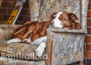 Brett Trafford Photography--153