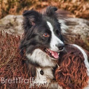 Brett Trafford Photography--3-5