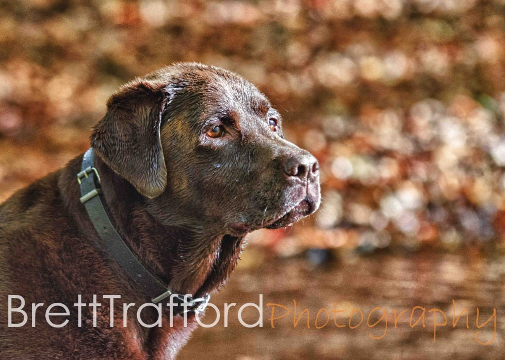 Brett Trafford Photography--46