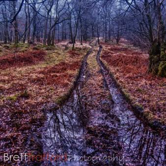 Brett Trafford Photography-24