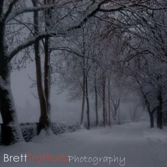 Brett Trafford Photography-5