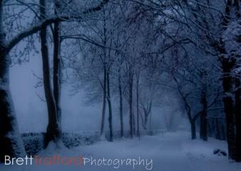 Brett Trafford Photography-7